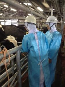 【鹿児島県】牛生体係留所