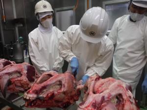 【鹿児島県】牛頭検査