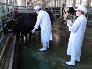 牛生体検査2