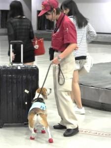 【動物検疫所】探知犬活動風景3