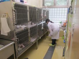 動物愛護センターでの現場体験