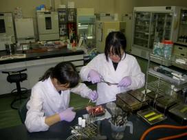 食肉衛生検査所での細菌検査実習