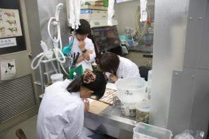 動物衛生研究所での実習